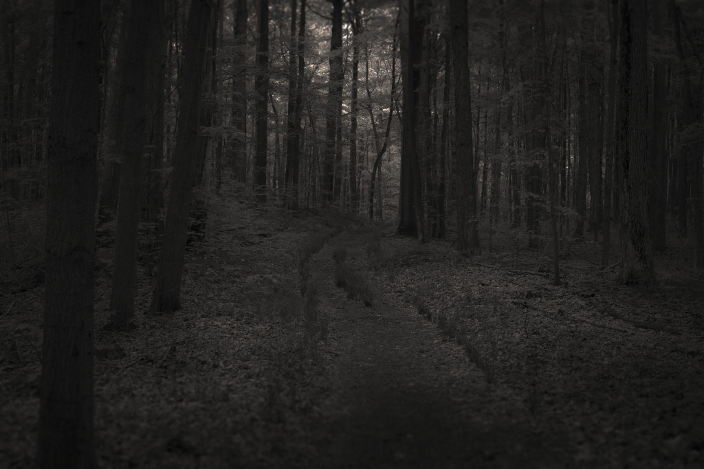 black forest path
