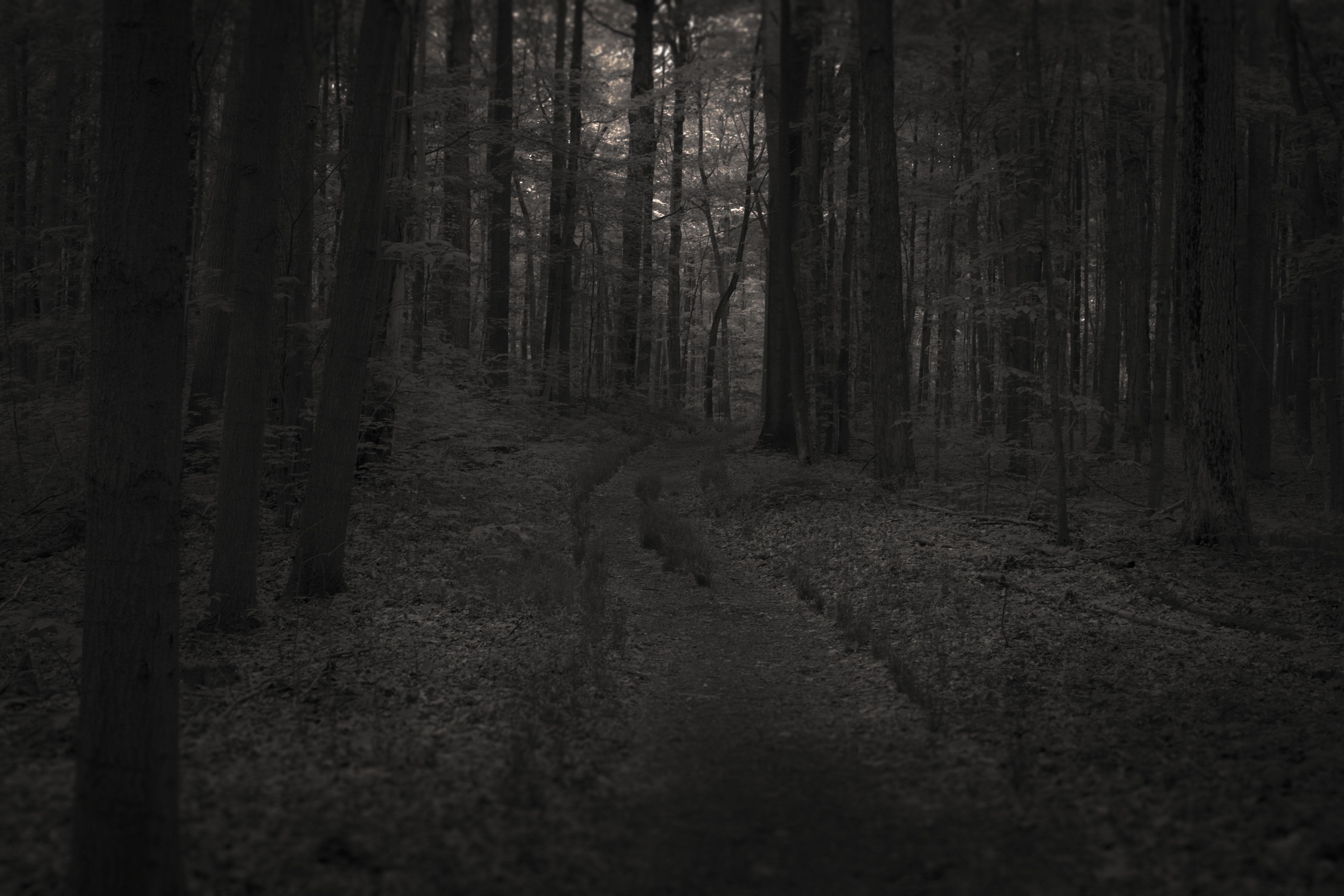 black-forest-path.jpg